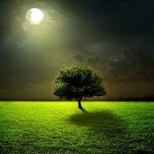 Full Moon with Lonely Tree