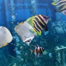 The Real Aquarium – LWP